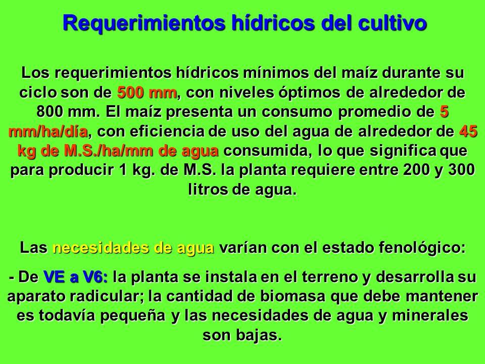 Requerimientos hídricos del cultivo Los requerimientos hídricos mínimos del maíz durante su ciclo son de 500 mm, con niveles óptimos de alrededor de 8