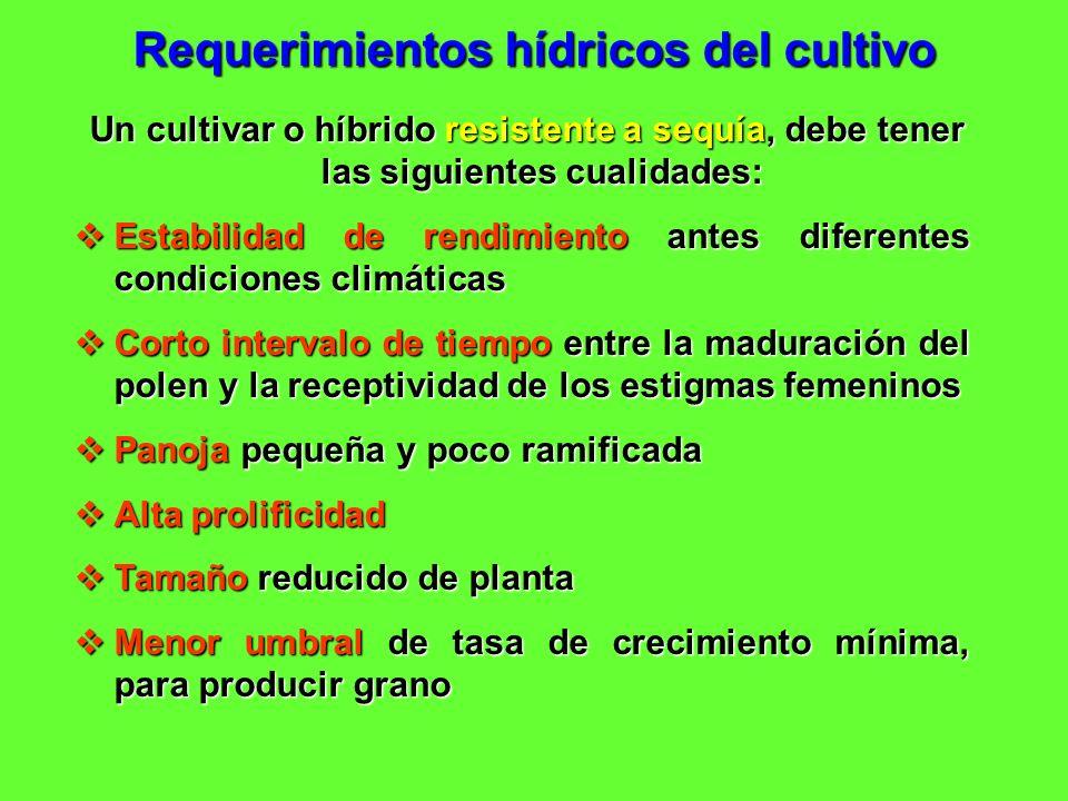 Requerimientos hídricos del cultivo Un cultivar o híbrido resistente a sequía, debe tener las siguientes cualidades: Un cultivar o híbrido resistente