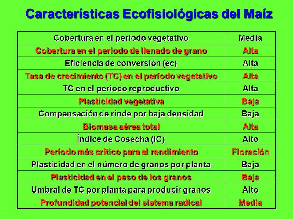 Características Ecofisiológicas del Maíz Cobertura en el período vegetativo Media Cobertura en el período de llenado de grano Alta Eficiencia de conve