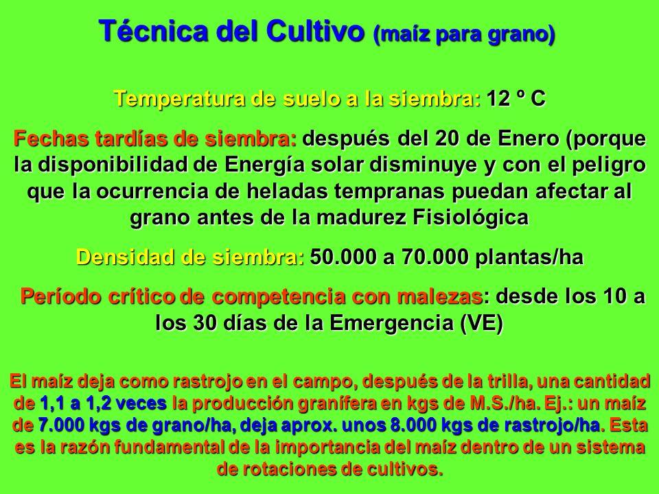 Técnica del Cultivo (maíz para grano) Temperatura de suelo a la siembra: 12 º C Fechas tardías de siembra: después del 20 de Enero (porque la disponib