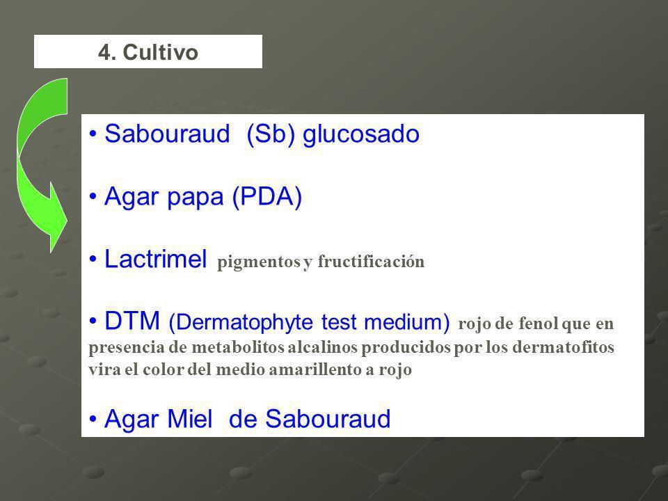 Sabouraud (Sb) glucosado Agar papa (PDA) Lactrimel pigmentos y fructificación DTM (Dermatophyte test medium) rojo de fenol que en presencia de metabolitos alcalinos producidos por los dermatofitos vira el color del medio amarillento a rojo Agar Miel de Sabouraud 4.