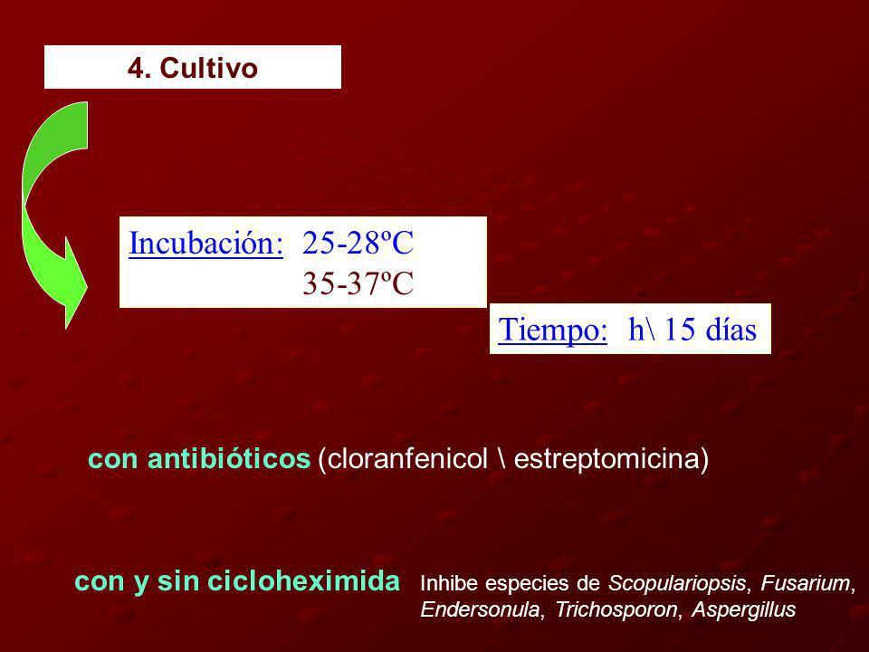 Incubación: 25-28ºC 35-37ºC Tiempo: h\ 15 días con antibióticos (cloranfenicol \ estreptomicina) con y sin cicloheximida Inhibe especies de Scopulariopsis, Fusarium, Endersonula, Trichosporon, Aspergillus 4.