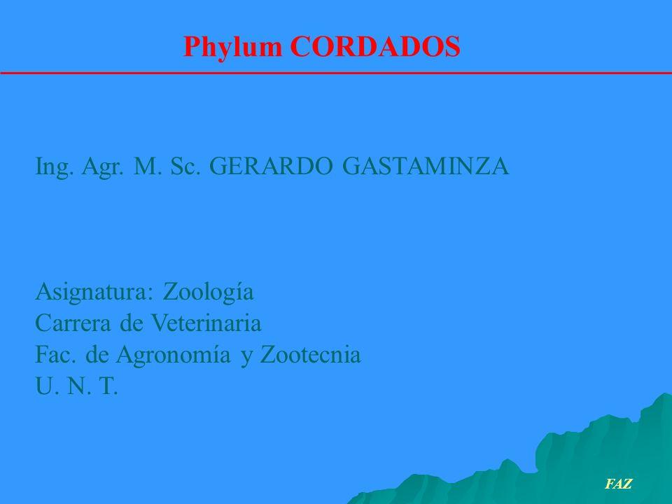 Ing. Agr. M. Sc. GERARDO GASTAMINZA Asignatura: Zoología Carrera de Veterinaria Fac. de Agronomía y Zootecnia U. N. T. Phylum CORDADOS FAZ