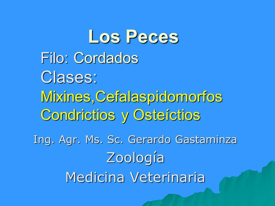 Los Peces Filo: Cordados Clases: Mixines,Cefalaspidomorfos Condrictios y Osteíctios Los Peces Filo: Cordados Clases: Mixines,Cefalaspidomorfos Condric