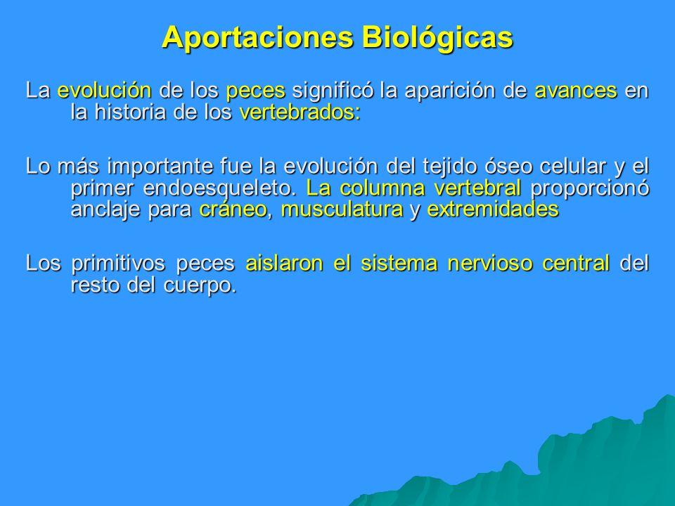 Aportaciones Biológicas La evolución de los peces significó la aparición de avances en la historia de los vertebrados: Lo más importante fue la evoluc