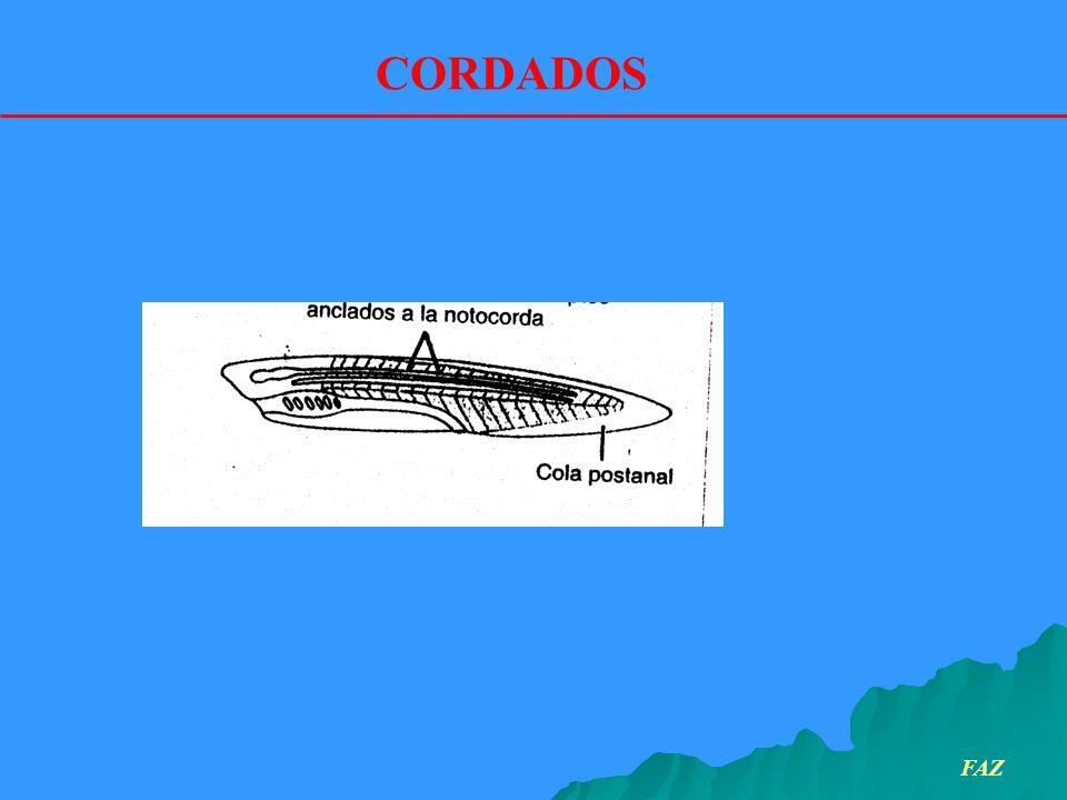 Introducción Antiguamente se designaba como pez a un variado conjunto de animales acuáticos.