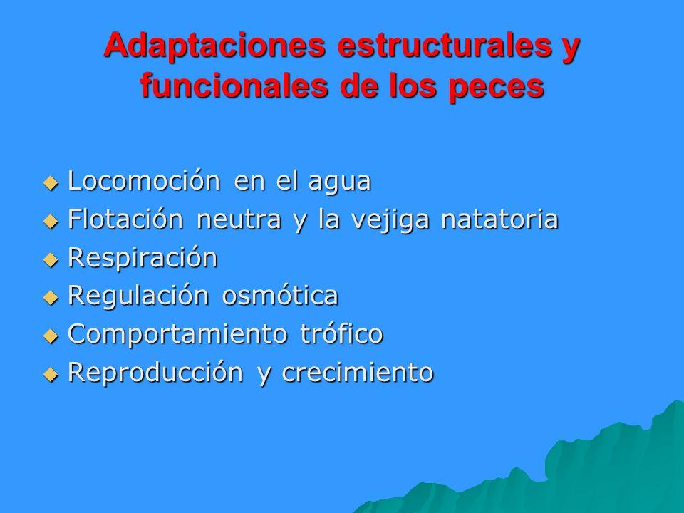 Adaptaciones estructurales y funcionales de los peces Locomoción en el agua Locomoción en el agua Flotación neutra y la vejiga natatoria Flotación neu