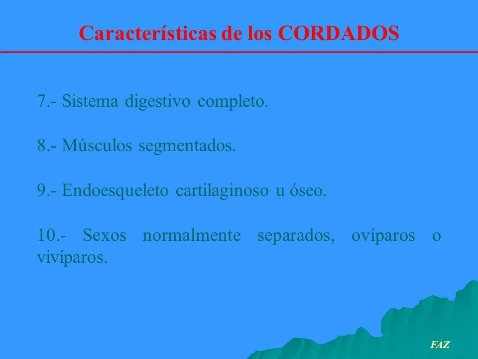7.- Sistema digestivo completo. 8.- Músculos segmentados. 9.- Endoesqueleto cartilaginoso u óseo. 10.- Sexos normalmente separados, ovíparos o vivípar