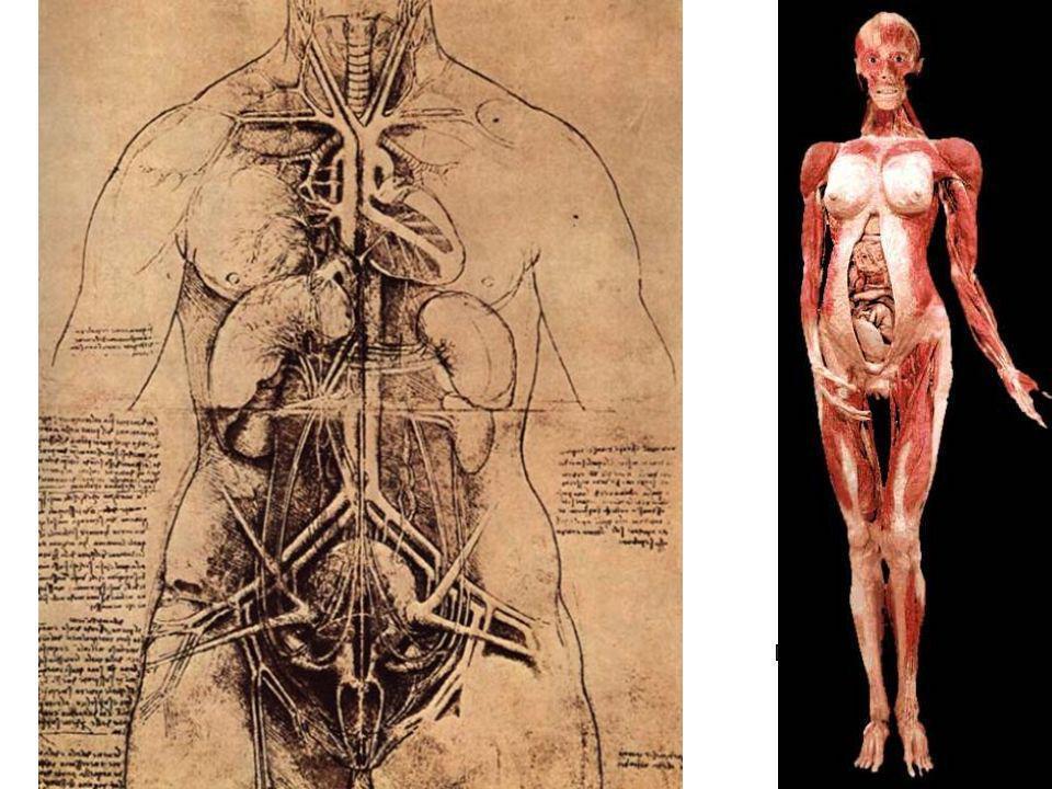 Leonardo Dibujo de torso de mujer Tinta sobre papel Biblioteca Ambrosiana