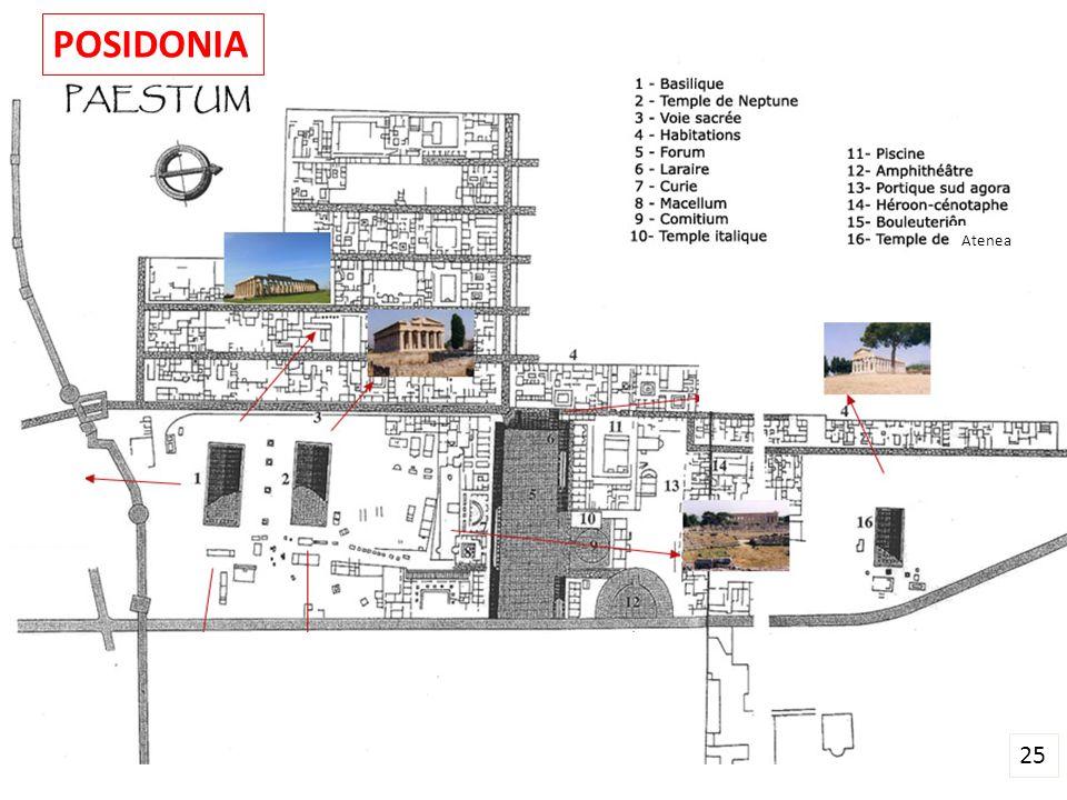 Atenea 25 POSIDONIA