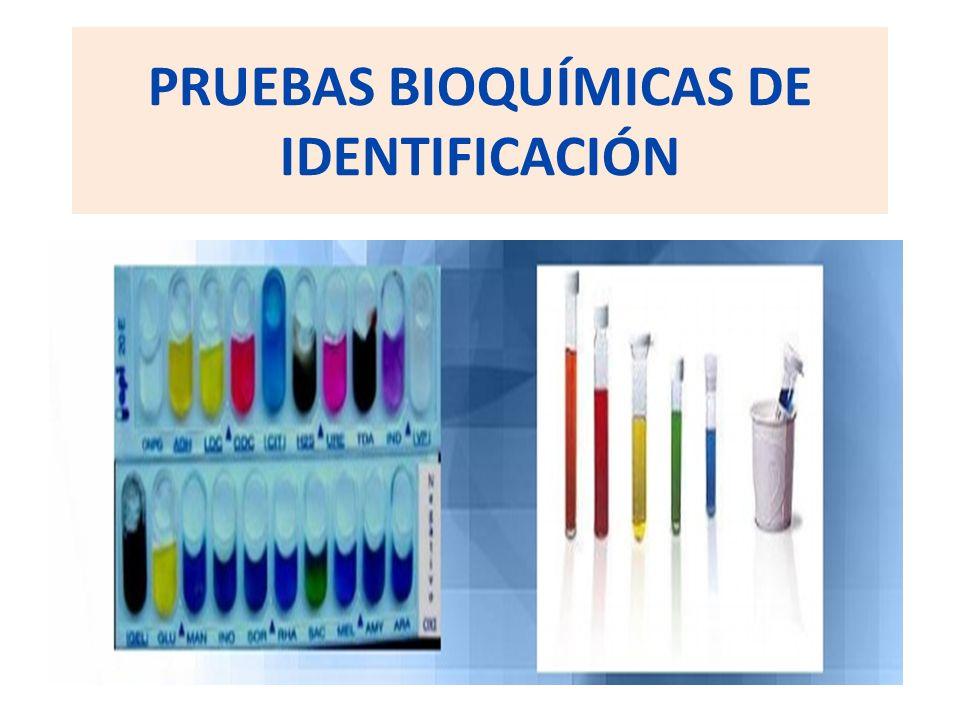 PRUEBAS BIOQUÍMICAS DE IDENTIFICACIÓN