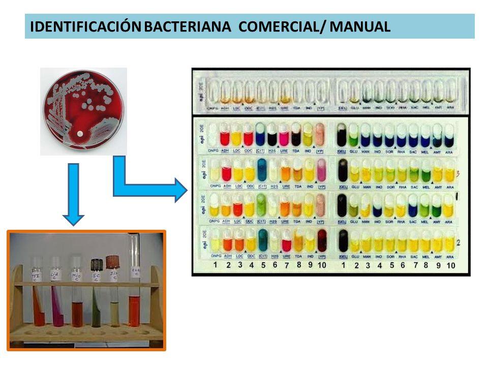 IDENTIFICACIÓN BACTERIANA COMERCIAL/ MANUAL