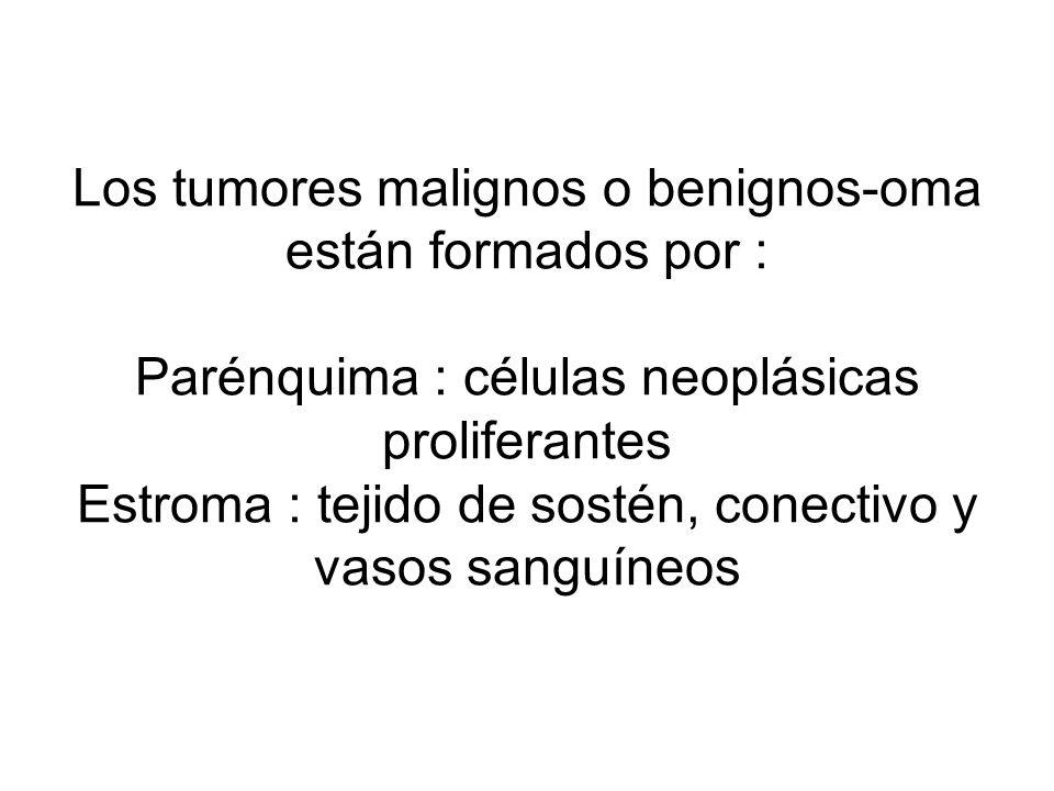 Los tumores malignos o benignos-oma están formados por : Parénquima : células neoplásicas proliferantes Estroma : tejido de sostén, conectivo y vasos