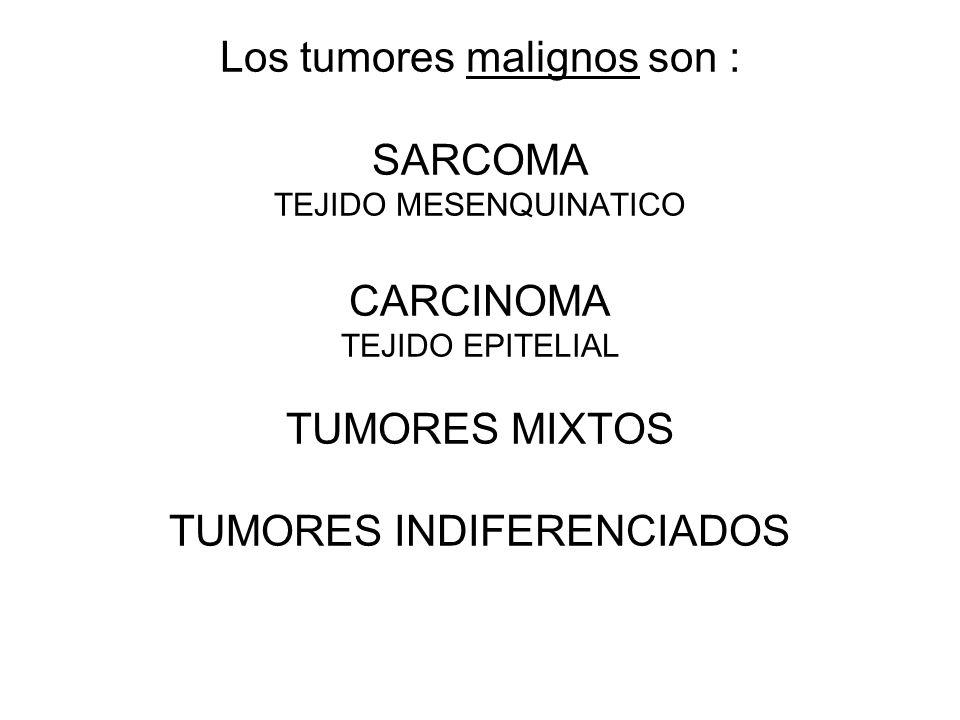 Los tumores malignos son : SARCOMA TEJIDO MESENQUINATICO CARCINOMA TEJIDO EPITELIAL TUMORES MIXTOS TUMORES INDIFERENCIADOS