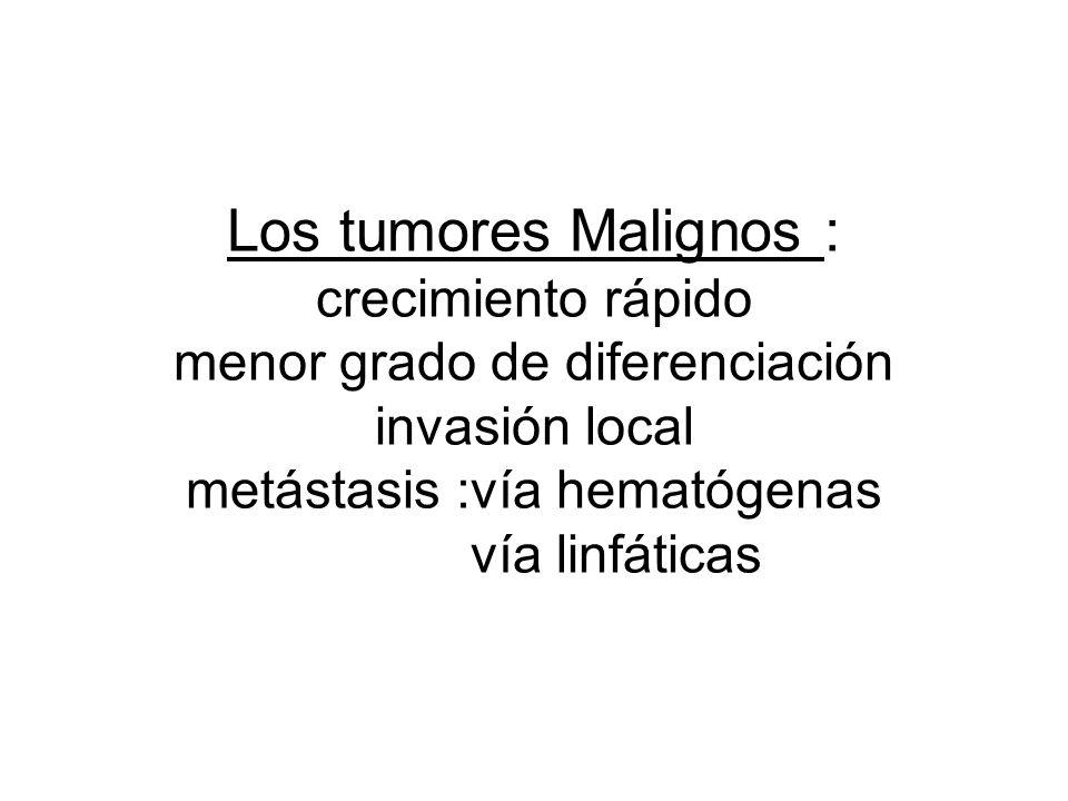 Los tumores Malignos : crecimiento rápido menor grado de diferenciación invasión local metástasis :vía hematógenas vía linfáticas