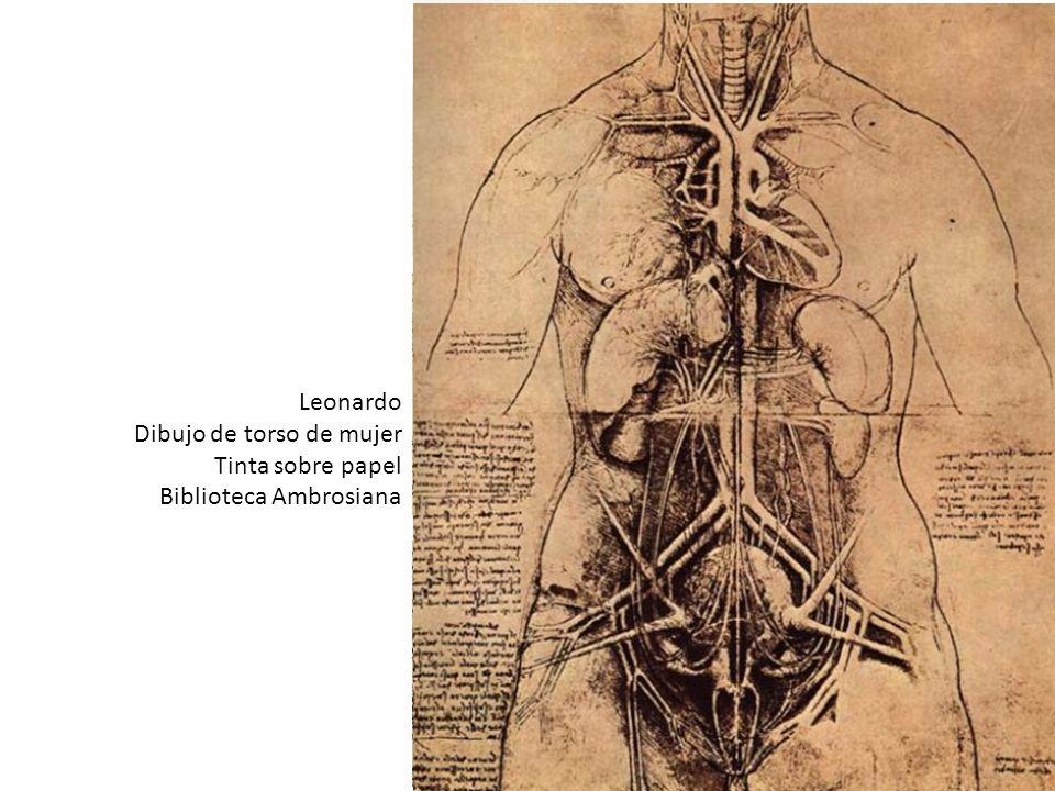 Leonardo Dibujo de torso de mujer Tinta sobre papel Biblioteca Ambrosiana Leonardo, sin embargo, se acercó a la naturaleza para investigarla. Aplicó a