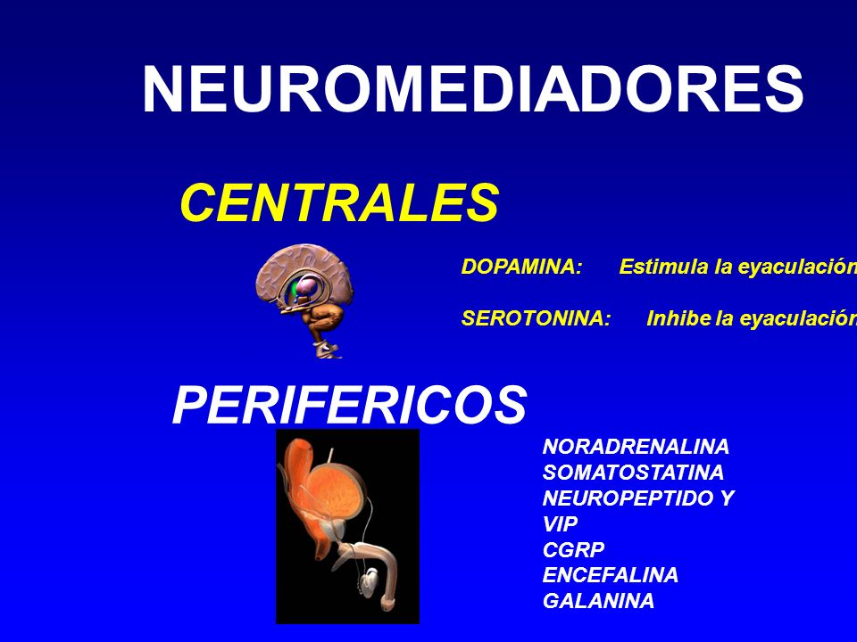 NEUROMEDIADORES CENTRALES PERIFERICOS DOPAMINA: Estimula la eyaculación SEROTONINA: Inhibe la eyaculación NORADRENALINA SOMATOSTATINA NEUROPEPTIDO Y V
