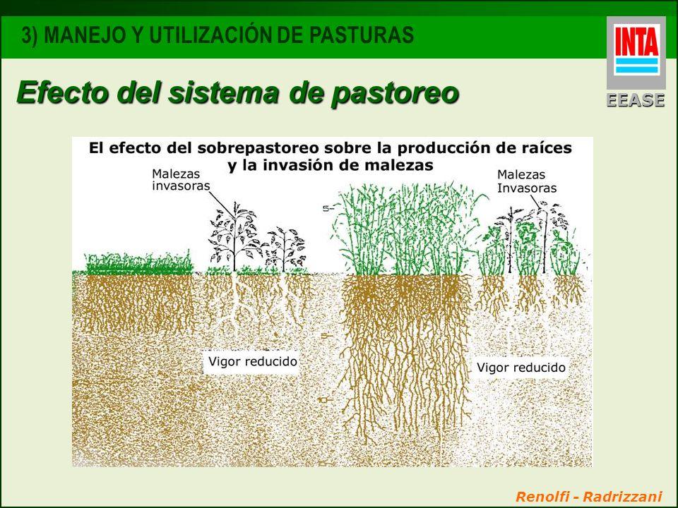 Efecto del sistema de pastoreo EEASE 3) MANEJO Y UTILIZACIÓN DE PASTURAS Renolfi - Radrizzani