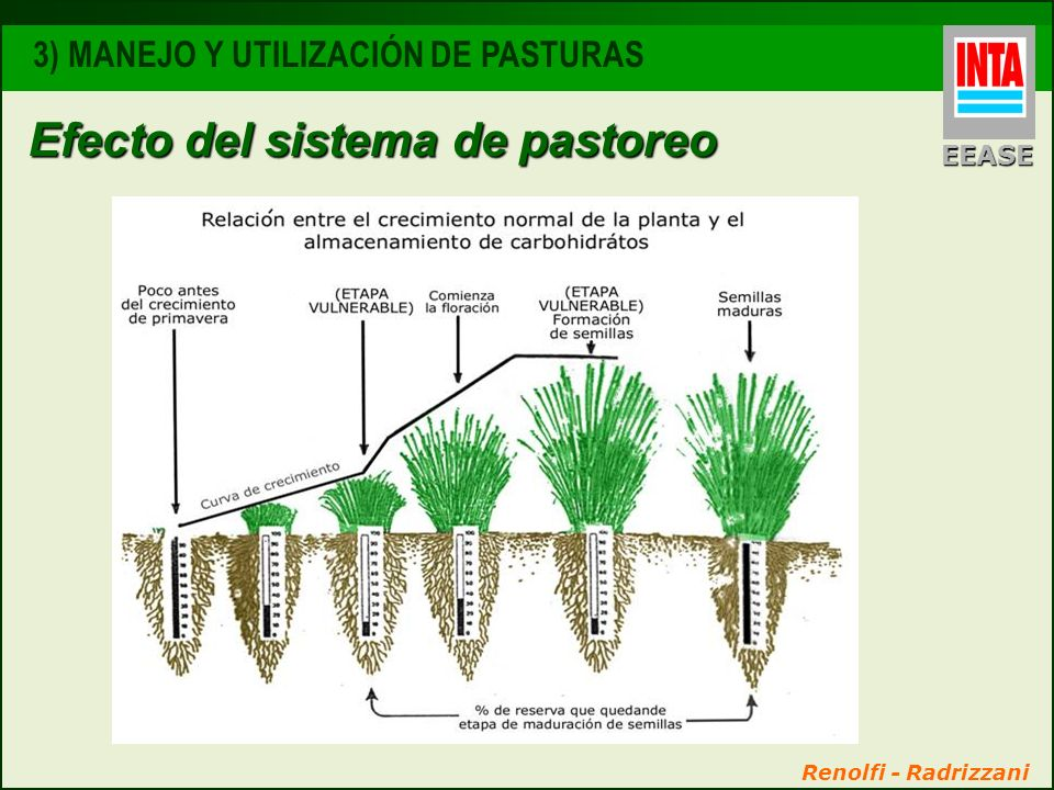 Renolfi - Radrizzani Efecto del sistema de pastoreo EEASE 3) MANEJO Y UTILIZACIÓN DE PASTURAS