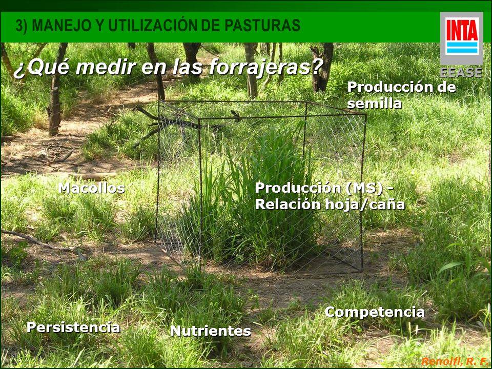 Competencia Persistencia Producción (MS) - Relación hoja/caña Nutrientes Macollos Producción de semilla Renolfi, R. F. ¿Qué medir en las forrajeras? E