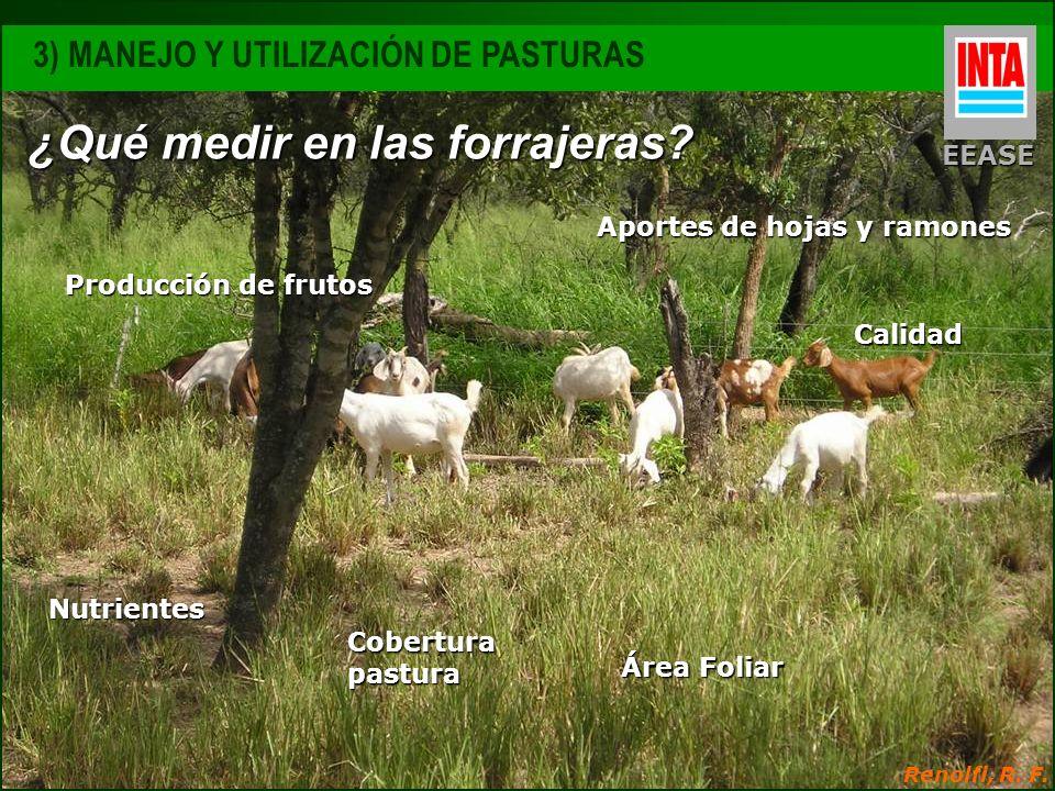 Calidad Área Foliar Nutrientes Producción de frutos Cobertura pastura Aportes de hojas y ramones Renolfi, R. F. ¿Qué medir en las forrajeras? EEASE 3)