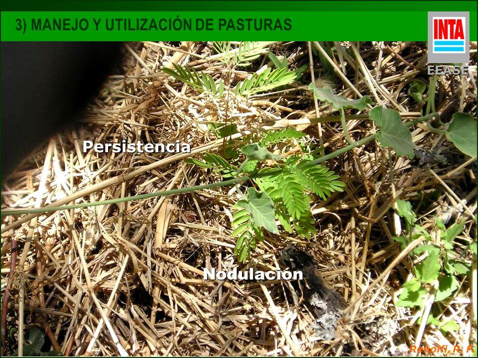 Nodulación EEASE 3) MANEJO Y UTILIZACIÓN DE PASTURAS Renolfi, R. F. Persistencia