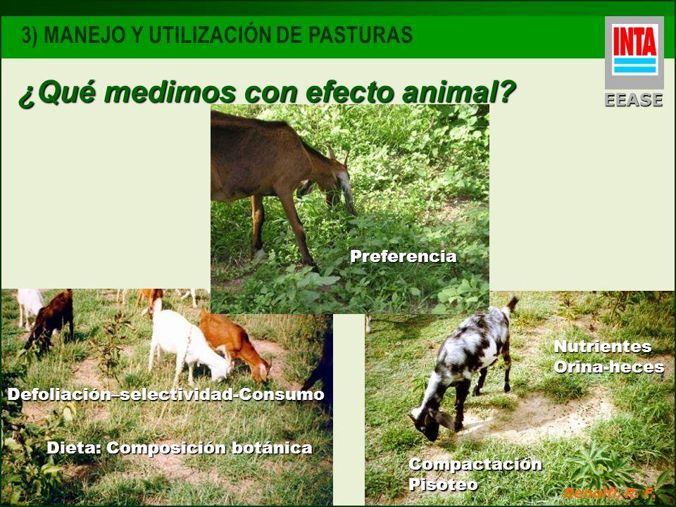 ¿Qué medimos con efecto animal? EEASE 3) MANEJO Y UTILIZACIÓN DE PASTURAS Defoliación–selectividad-Consumo Dieta: Composición botánica Nutrientes Orin