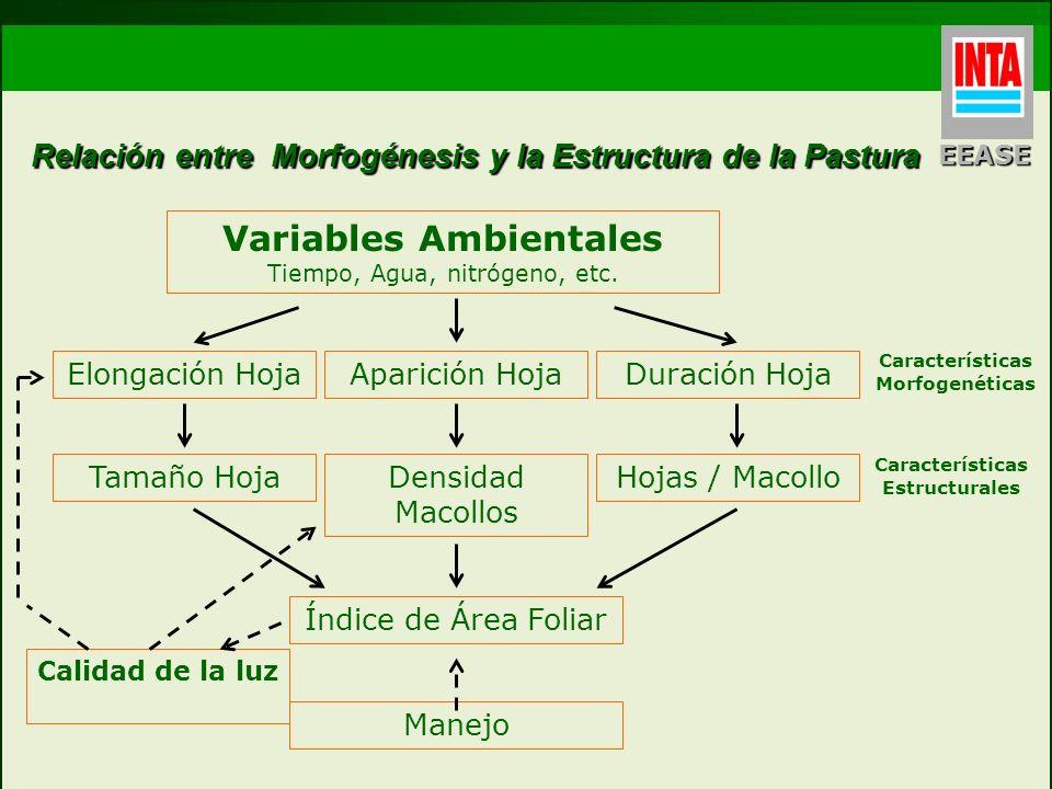Relación entre Morfogénesis y la Estructura de la Pastura Variables Ambientales Tiempo, Agua, nitrógeno, etc. Elongación Hoja Tamaño Hoja Aparición Ho