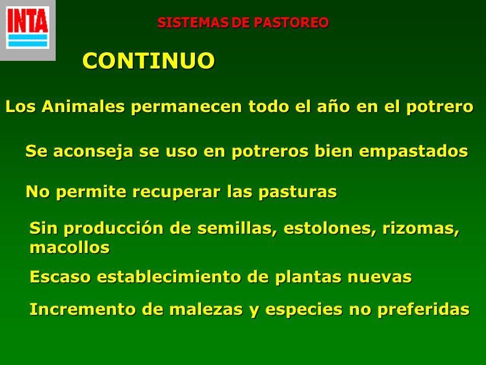 SISTEMAS DE PASTOREO CONTINUO Se aconseja se uso en potreros bien empastados No permite recuperar las pasturas Sin producción de semillas, estolones,