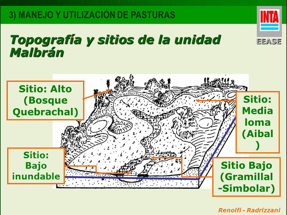 Topografía y sitios de la unidad Malbrán Renolfi - Radrizzani Sitio: Alto (Bosque Quebrachal) 3) MANEJO Y UTILIZACIÓN DE PASTURAS EEASE Sitio: Media l