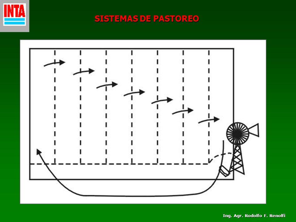 SISTEMAS DE PASTOREO Ing. Agr. Rodolfo F. Renolfi