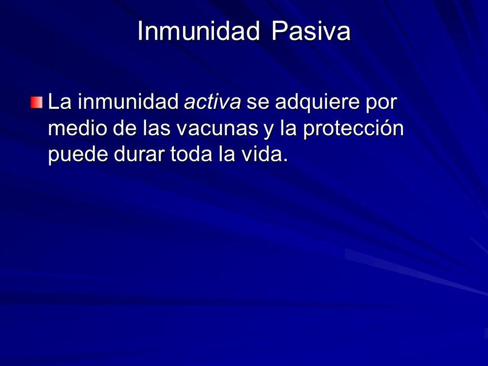 La inmunidad activa se adquiere por medio de las vacunas y la protección puede durar toda la vida. Inmunidad Pasiva
