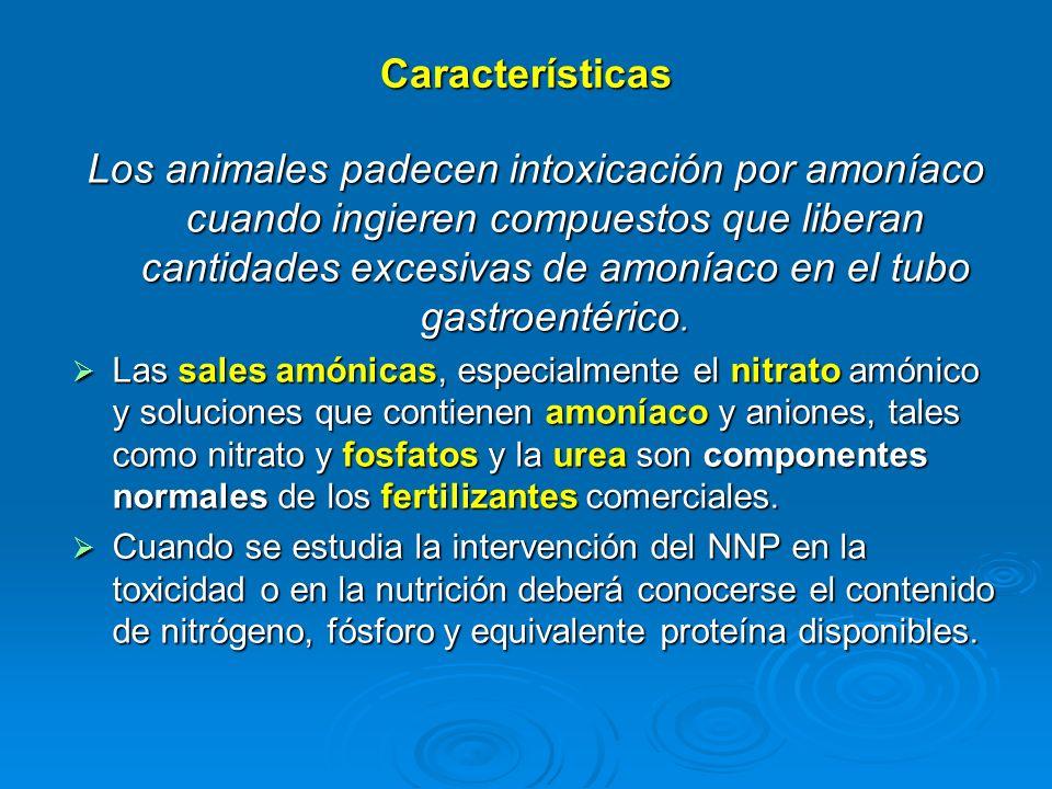 Características Los animales padecen intoxicación por amoníaco cuando ingieren compuestos que liberan cantidades excesivas de amoníaco en el tubo gast