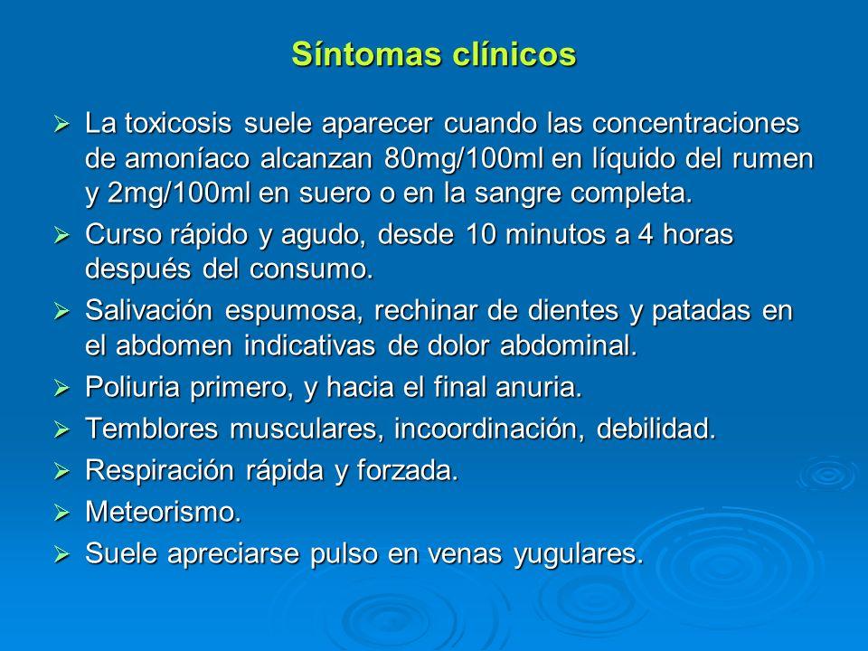Síntomas clínicos La toxicosis suele aparecer cuando las concentraciones de amoníaco alcanzan 80mg/100ml en líquido del rumen y 2mg/100ml en suero o e