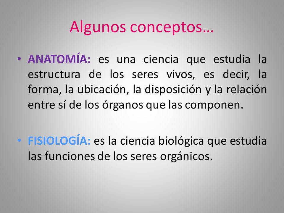 Algunos conceptos… ANATOMÍA: es una ciencia que estudia la estructura de los seres vivos, es decir, la forma, la ubicación, la disposición y la relaci