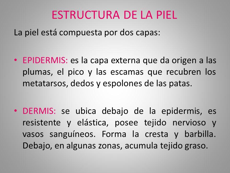 TIPOS DE CRESTAS
