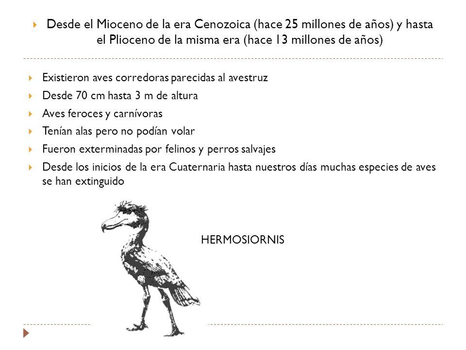 Desde el Mioceno de la era Cenozoica (hace 25 millones de años) y hasta el Plioceno de la misma era (hace 13 millones de años) Existieron aves corredoras parecidas al avestruz Desde 70 cm hasta 3 m de altura Aves feroces y carnívoras Tenían alas pero no podían volar Fueron exterminadas por felinos y perros salvajes Desde los inicios de la era Cuaternaria hasta nuestros días muchas especies de aves se han extinguido HERMOSIORNIS