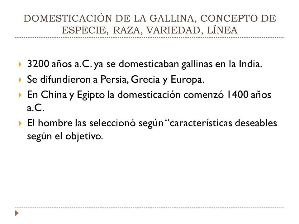 DOMESTICACIÓN DE LA GALLINA, CONCEPTO DE ESPECIE, RAZA, VARIEDAD, LÍNEA 3200 años a.C.