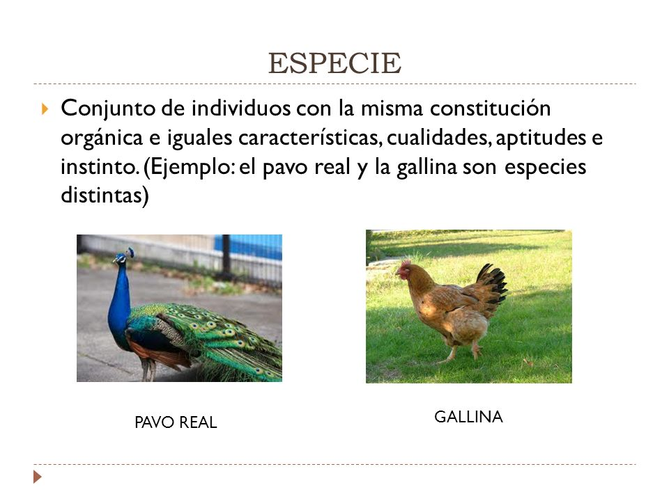 ESPECIE Conjunto de individuos con la misma constitución orgánica e iguales características, cualidades, aptitudes e instinto.