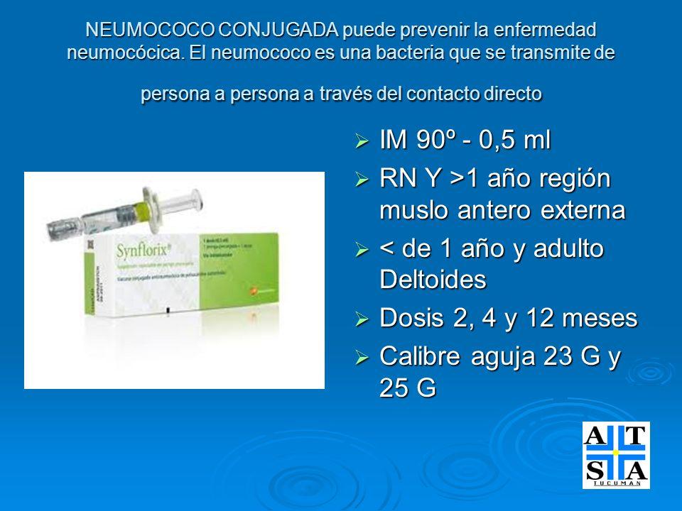 NEUMOCOCO CONJUGADA puede prevenir la enfermedad neumocócica. El neumococo es una bacteria que se transmite de persona a persona a través del contacto