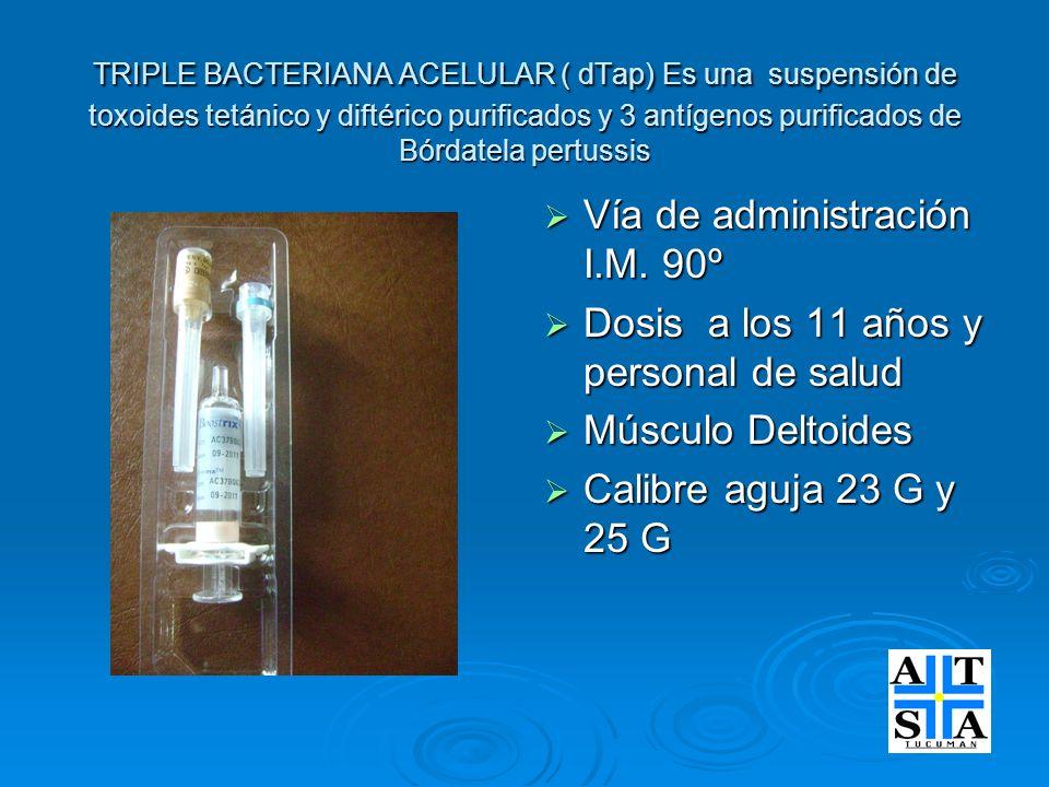 TRIPLE BACTERIANA ACELULAR ( dTap) Es una suspensión de toxoides tetánico y diftérico purificados y 3 antígenos purificados de Bórdatela pertussis Vía
