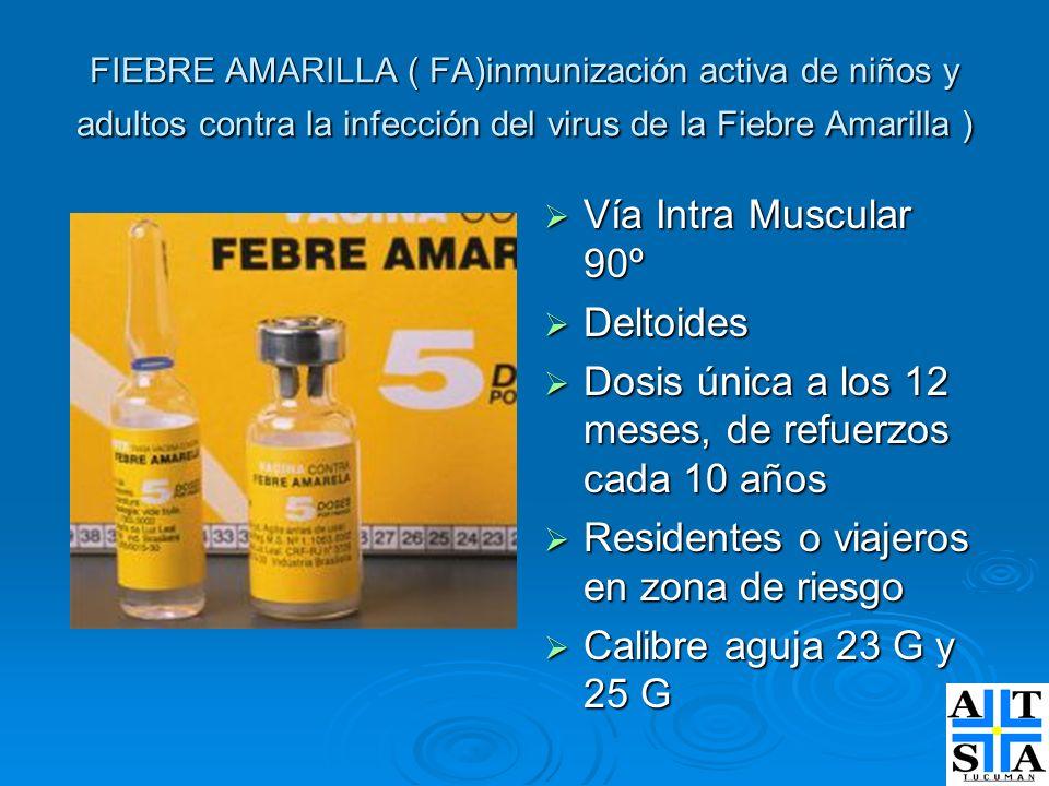 FIEBRE AMARILLA ( FA)inmunización activa de niños y adultos contra la infección del virus de la Fiebre Amarilla ) Vía Intra Muscular 90º Vía Intra Mus