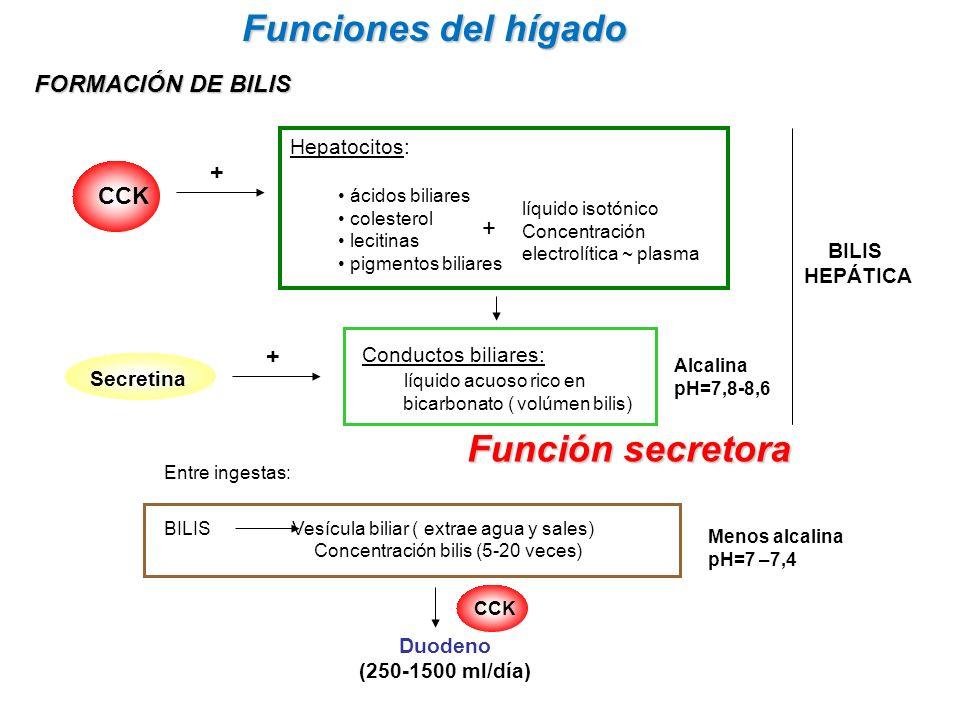 Funciones del hígado Función secretora FORMACIÓN DE BILIS Conductos biliares: líquido acuoso rico en bicarbonato ( volúmen bilis) CCK Secretina BILIS Vesícula biliar ( extrae agua y sales) Concentración bilis (5-20 veces) Duodeno (250-1500 ml/día) Hepatocitos: ácidos biliares colesterol lecitinas pigmentos biliares líquido isotónico Concentración electrolítica ~ plasma + Alcalina pH=7,8-8,6 Menos alcalina pH=7 –7,4 + Entre ingestas: + CCK BILIS HEPÁTICA