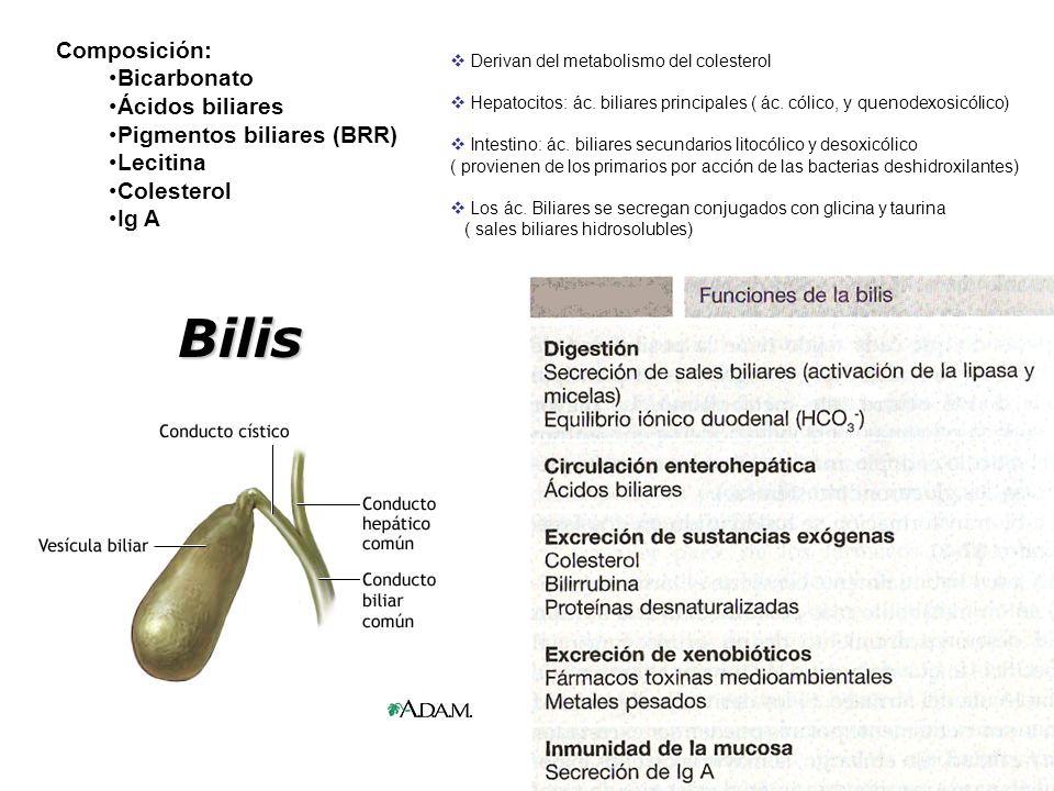 Composición: Bicarbonato Ácidos biliares Pigmentos biliares (BRR) Lecitina Colesterol Ig A Bilis Derivan del metabolismo del colesterol Hepatocitos: ác.