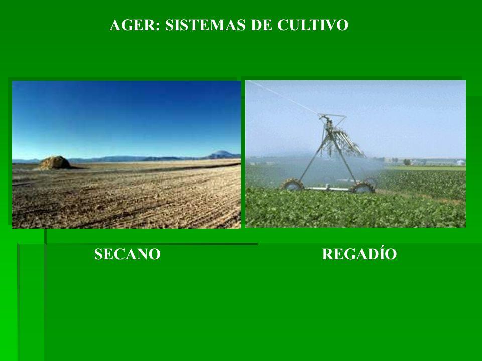 SECANOREGADÍO AGER: SISTEMAS DE CULTIVO