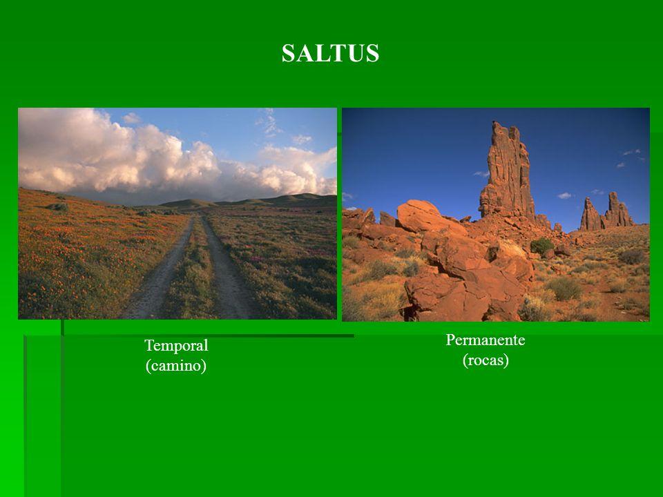 SALTUS Temporal (camino) Permanente (rocas)