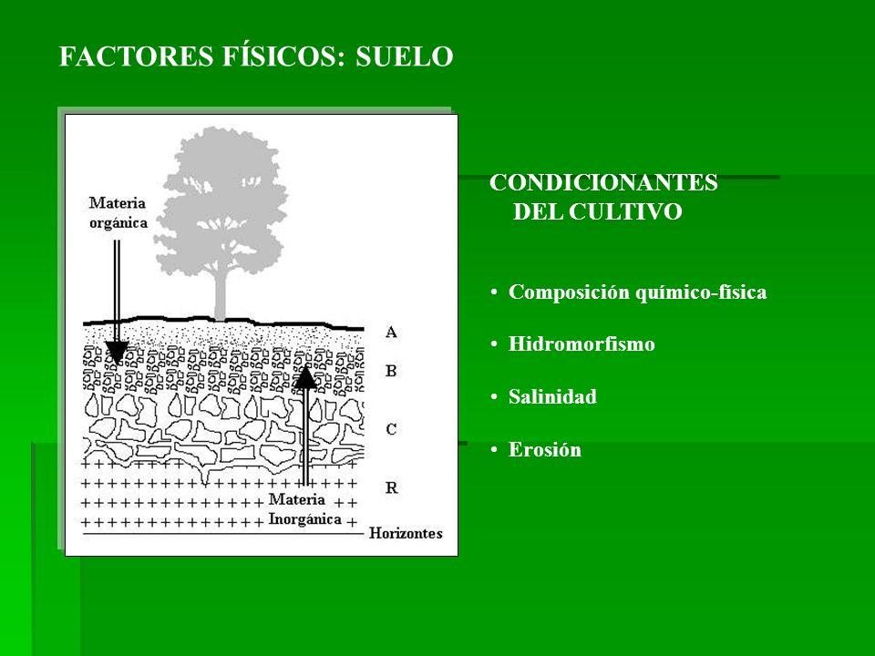 FACTORES FÍSICOS: SUELO CONDICIONANTES DEL CULTIVO Composición químico-física Hidromorfismo Salinidad Erosión