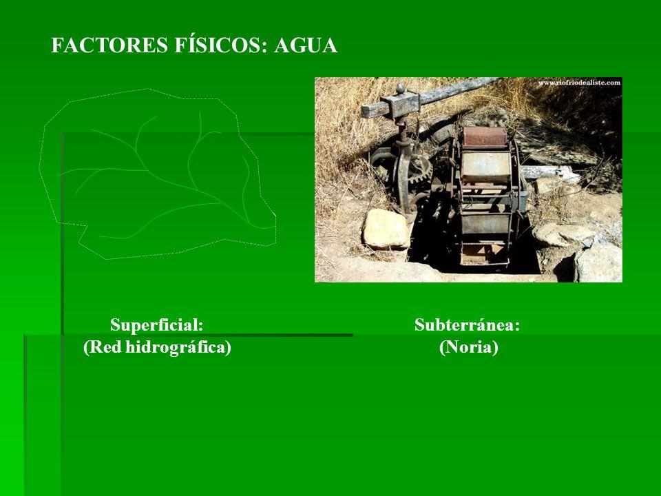 FACTORES FÍSICOS: AGUA Superficial: (Red hidrográfica) Subterránea: (Noria)