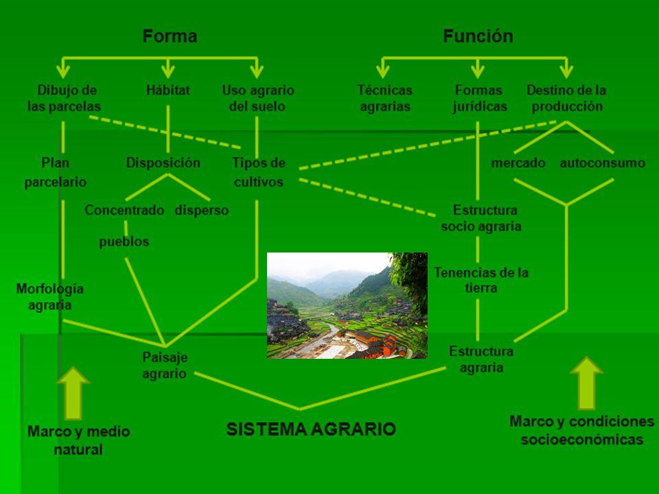PAISAJES MODERNOS: CULTIVOS INTENSIVOS PAISAJES MODERNOS: CULTIVOS INTENSIVOS Cultivos tubulares verticales Cultivos hidropónicos (horizontales) FRESAS