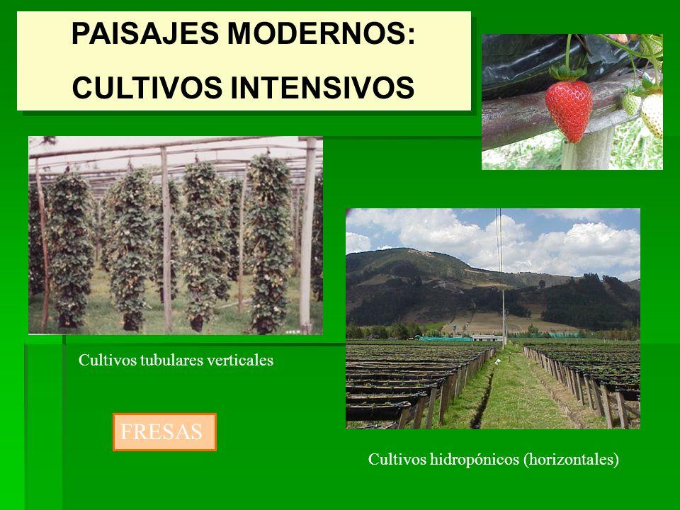 PAISAJES MODERNOS: CULTIVOS INTENSIVOS PAISAJES MODERNOS: CULTIVOS INTENSIVOS Cultivos tubulares verticales Cultivos hidropónicos (horizontales) FRESA